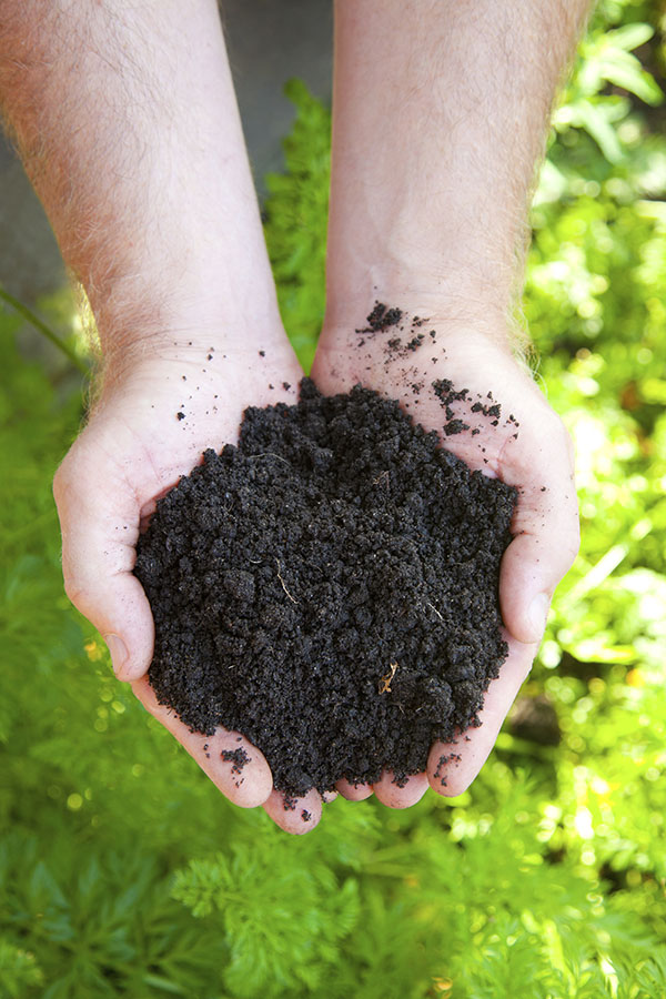 black soil in man hand